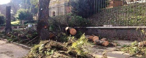 Abbattimento degli alberi, la nostra lettera alla Sindaca